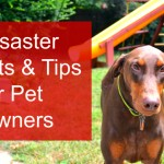 5 Disaster Tips for Pet Owners